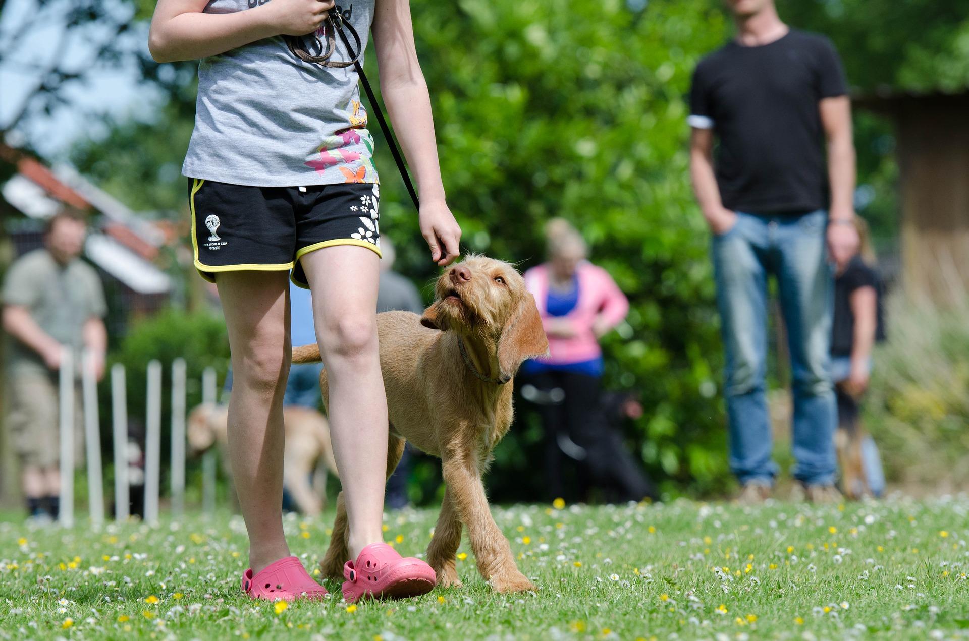 Pawsitive Dog Training